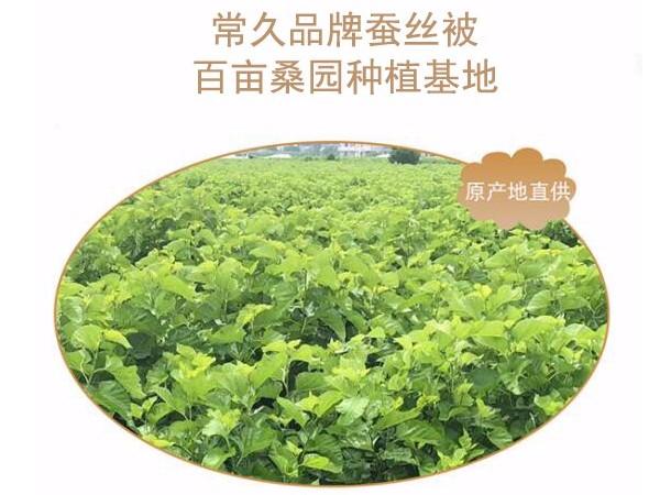 杭州哪里卖桑蚕丝被又好又便宜-蚕丝制品还须小心购买[常久]