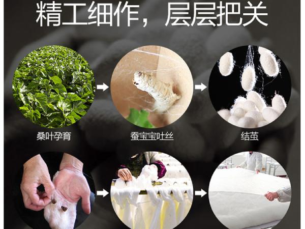 哪里有批发丝棉被-口碑厂家值得合作[常久]