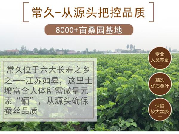 苏州蚕丝被批发零售-可选这家工厂进行合作[常久]