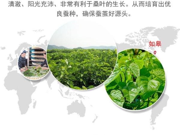 哪里买蚕丝被比较好-健康的环境生产品质好被子
