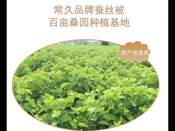 北京蚕丝被价格-找源头厂家价格更优惠[常久]
