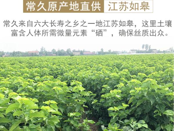 四川蚕丝被生产厂家-来这里看一看[常久]