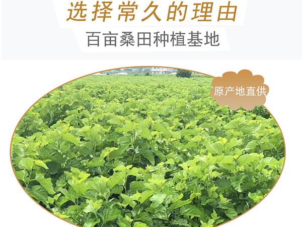 天津蚕丝被批发厂家-工厂的售后要有保障[常久]