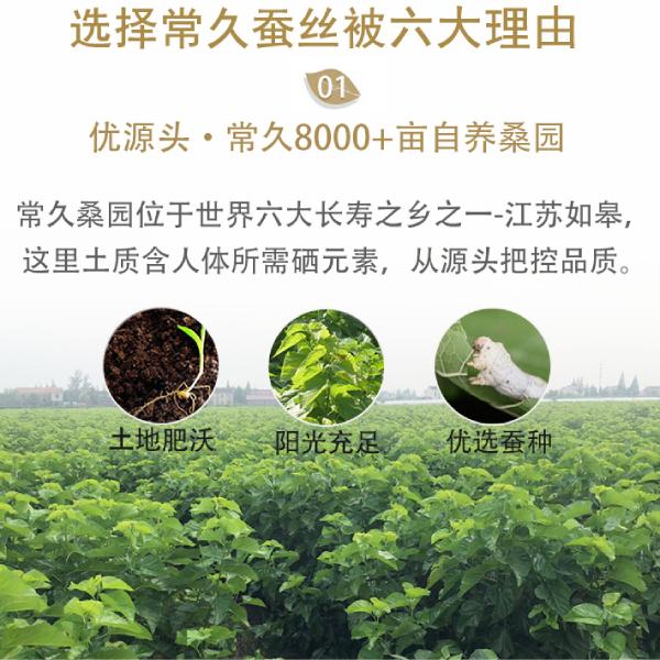 中国蚕丝被知名品牌