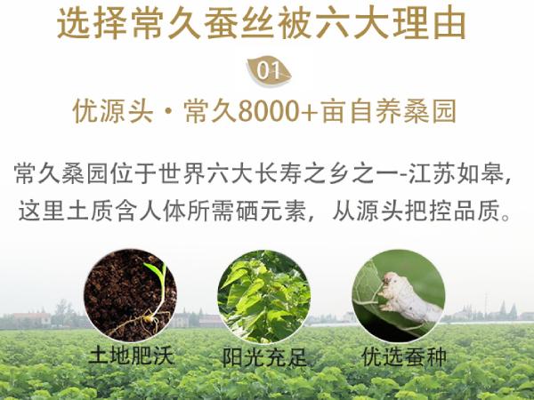 宁波哪有做蚕丝被-找品牌厂家可直接买好被[常久]