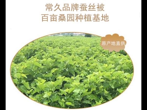 杭州蚕丝被在哪里批发-批发还须找到可靠货源