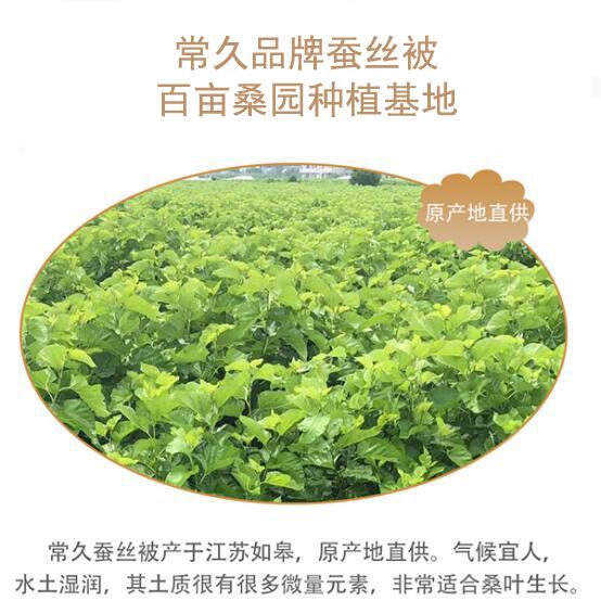 杭州蚕丝被在哪里批发