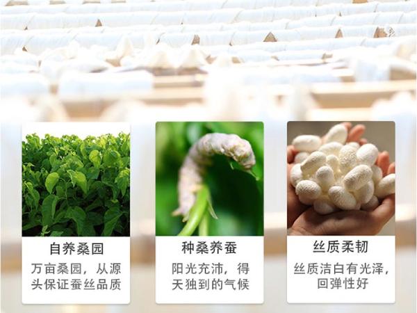 蚕丝被产于哪些地方-可别小看了一方水土的作用[常久]