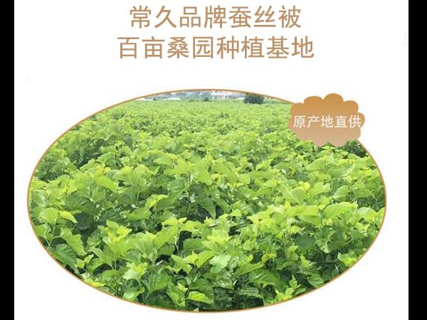 中国桑蚕丝被生产厂-正规工厂从源头把控品质[常久]